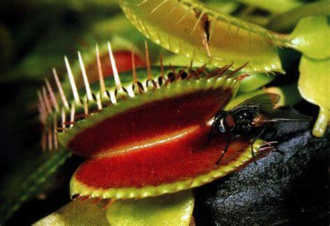 que son las imagenes figurativas realistas wikipedia clasificaci 243 n e historia de las plantas carn 237 voras taringa