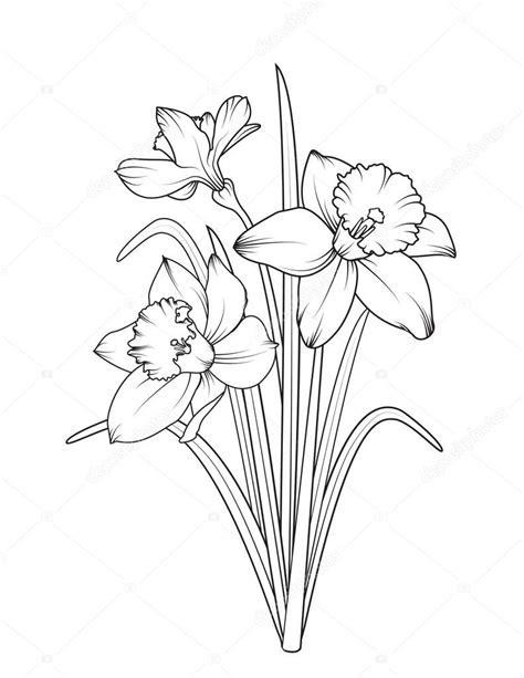 ізольовані нарцисів нарцис весняні квіти стоковий вектор