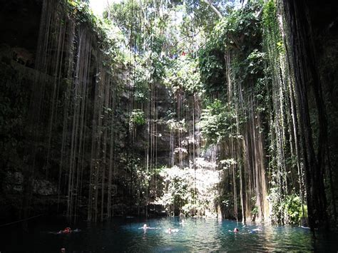 photo cancun pool jungle natural  image