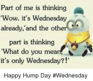 Wednesday Hump Day Meme - best 20 hump day meme ideas on pinterest funny hump day