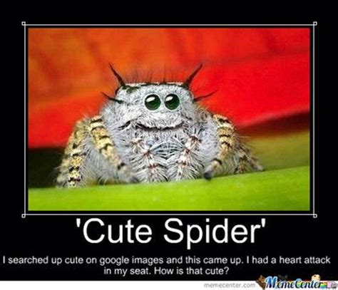 Spider Meme Pictures To Pin - cute spiders google search animal kingdom pinterest