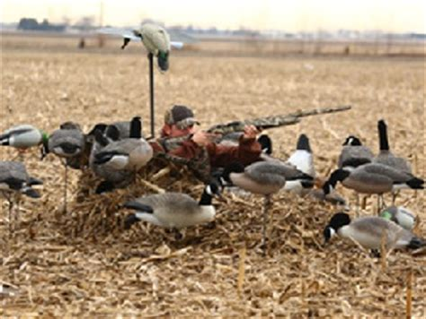 layout goose hunting the deluxe man cave layout blind for waterfowl hunters