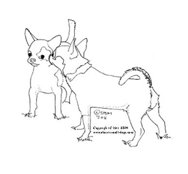 coloring pages chihuahua dogs chihuahua coloring pages coloring pinterest