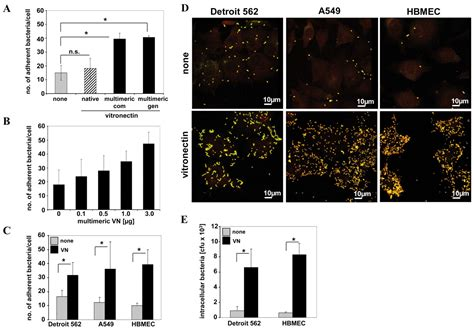 s protein vitronectin integrin linked kinase is required for vitronectin