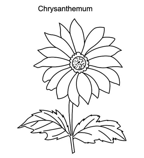chrysanthemum pages coloring pages