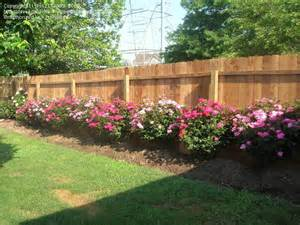 Landscaping Ideas Knockout Roses Landscaping Landscaping Ideas Knockout Roses