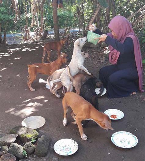 Rok Tutu Lucu Untuk Anjing Dan Kucing wanita berhijab jawab kritik gara gara beri makan anjing