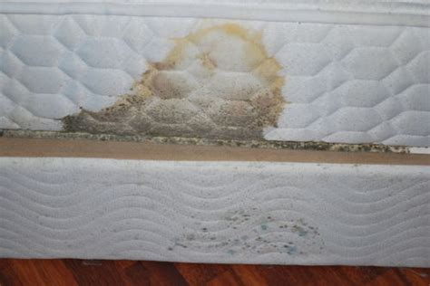 mold in my bedroom found mold in my bedroom are the landlords responsible