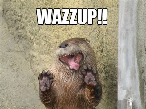 Wazzup Meme - otter otter meme and memes on pinterest