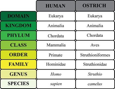 organism definition explanation lesson transcript study
