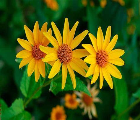 imagenes sorprendentes de flores flores bonitas fotos im 225 genes de flores hermosas