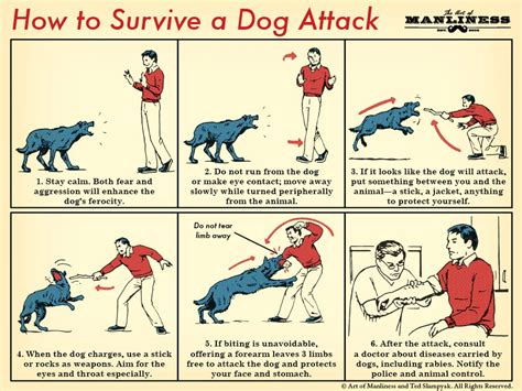 how to dogs to attack how to survive a attack the of manliness