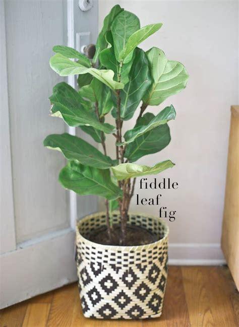 Indoor Plant Vases by Best 25 Indoor Plant Pots Ideas On Indoor