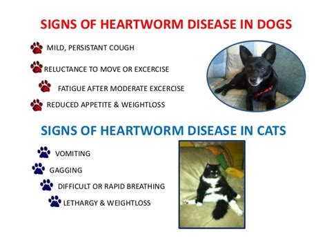 signs of heartworm in dogs big cypress heartworm