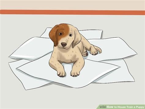 how does it take to house a puppy how does it take to house a puppy house plan 2017