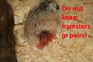 7 Tips On Taking Care Of Hamsters by 10 Steps To Care For Your Hamster Post How To