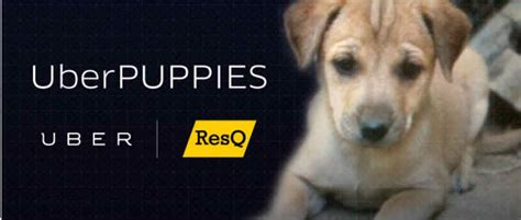 uber puppies uber pune is deploying puppymobiles in the city tomorrow to encourage pet