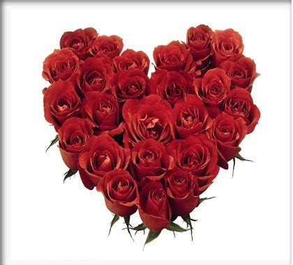 gambar bunga mawar merah  bentuk love gambar hidup
