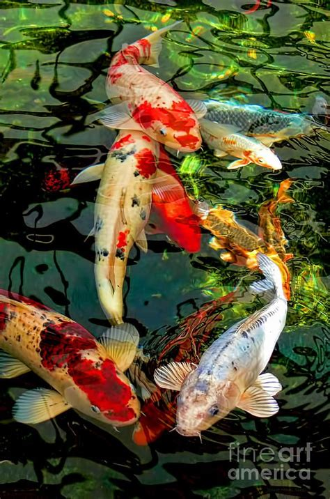 anipet koi live wallpaper full version free download 3d koi fish live clipart