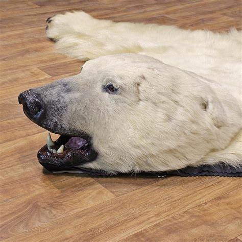 Polar Rugs For Sale by Polar Rugs Roselawnlutheran