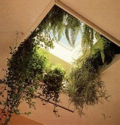 low light hanging plants indoors 1000 images about indoor low light plants on pinterest
