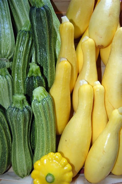 types of vegetables to grow in a garden growing summer squash planting summer squash plants