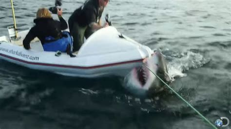 jaws 2 charter boat anti cage diving groups use video of great white shark