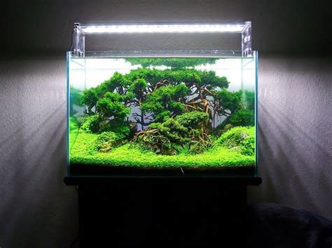 design aquascape mini forest scape by frederic fuss pin by aqua poolkoh