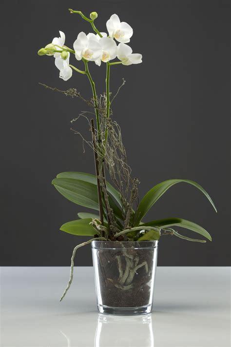 flower pot planter orchid orchid pot glass clear ebay