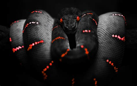 themes in black mamba black snake wallpapers all about snake world snake