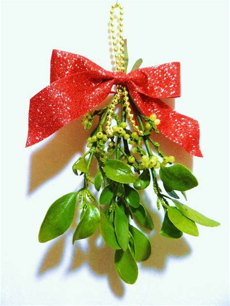 best 25 mistletoe plant ideas on pinterest plants of