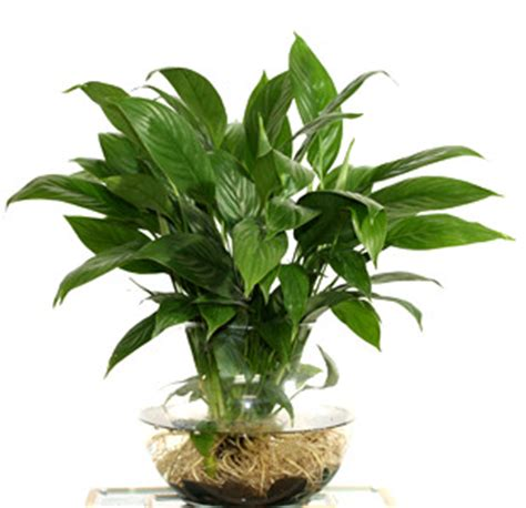 plants for desk cool ways to increase productivity at work indusladies com