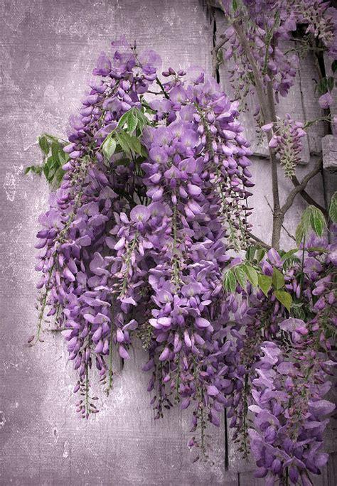 wisteria flower september 2012 taneja s bride page 2