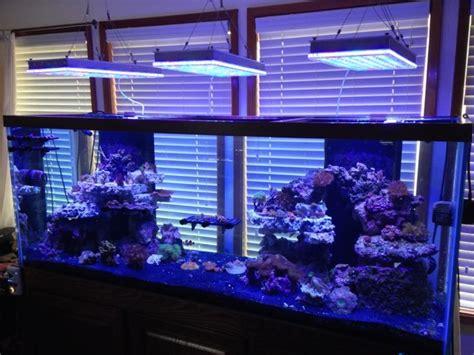 beleuchtung aquarium aquarium led lighting photos best reef aquarium led
