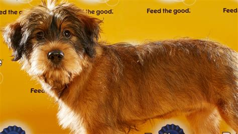 puppy bowl mvp 2016 mvp named in puppy bowl xii ign