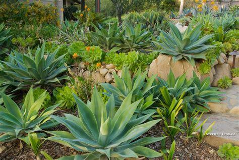 1000 images about dan s dream garden on pinterest