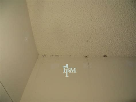evidence of bed bugs bed bug evidence in large bed bug infestations bugs