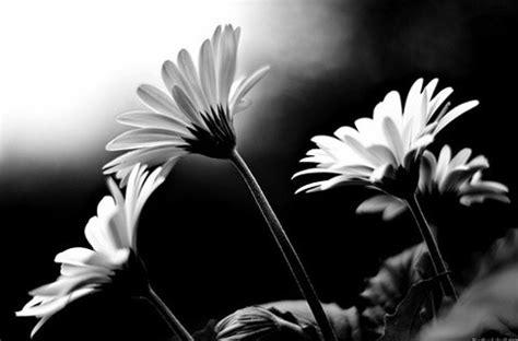 il fiore bianco come un fiore bianco e nero
