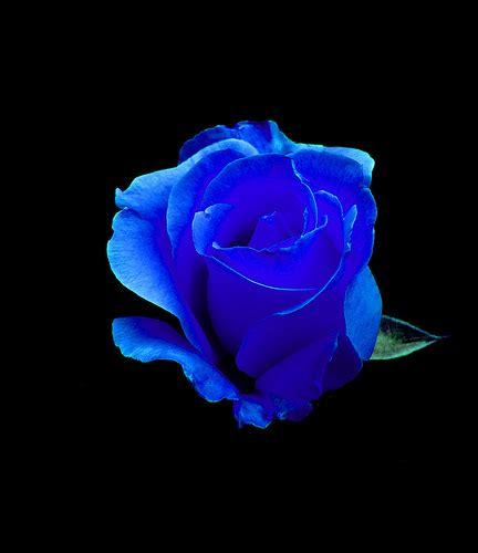 imagenes hd feliz noche con rosas azules rosas azules