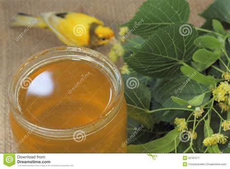 bloemen kalken honing van de bloemen van linde stock foto afbeelding