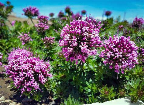 piante mediterranee da vaso vivaio 98 3 187 piante mediterranee 187 tarquinia viterbo