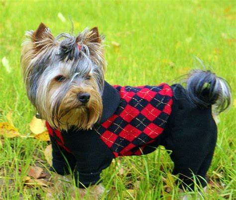 clothes for yorkies yorkie clothes yorkies