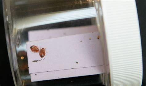 bed bug lawsuit lawsuit charges waldorf had bedbugs emirates 24 7
