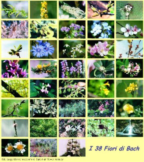 fiori do bach fiori di bach