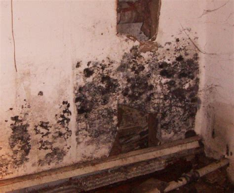 black basement mold basement waterproofing warning signs