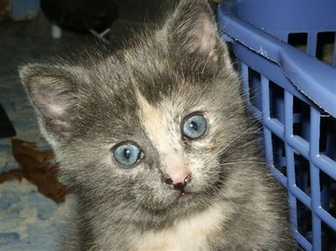 kittens  pets