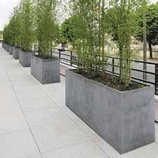 grow  bamboo privacy screen  containers bamboo