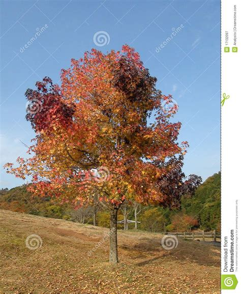 multi color tree multi color tree royalty free stock photography image