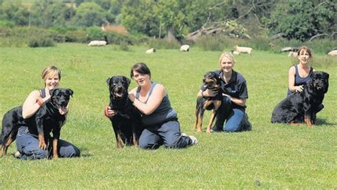 rottweiler obedience classes obedience for your rottweiler rottweilerhq