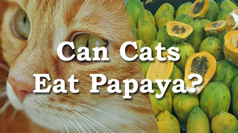 can dogs eat papaya can cats eat papaya pet consider